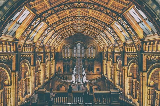 #London #museum #photo #diegocalocero